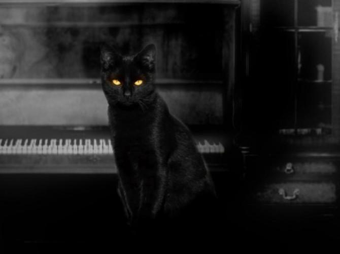 Cat Lady (1)